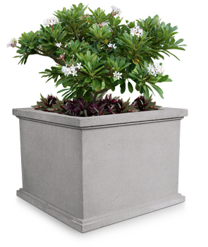 Model SQP-48 | Square Concrete Flower Pot (LSB Dove Gray)