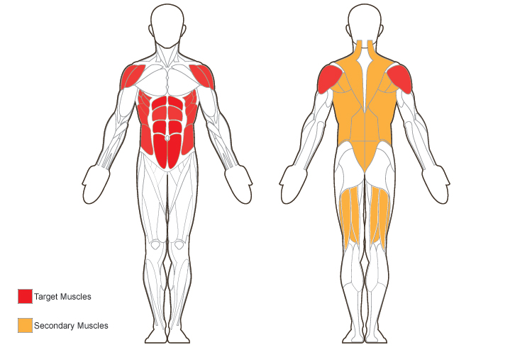 Belson Closerlook Front And Back Target Muscles