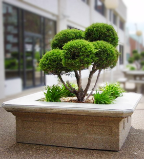 Model VP73X24 | Victorian Series Concrete Planters (Sand Tan | LSB Finish)